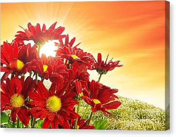 Spring Blossom Canvas Print by Carlos Caetano