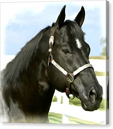 Stallion Canvas Print by Paul Tagliamonte