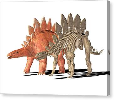 Stegosaurus Dinosaur Canvas Print by Friedrich Saurer