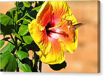 Sunny And Bright Canvas Print by Lynn Bauer