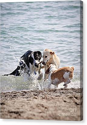 Three Dogs Playing On Beach Canvas Print by Elena Elisseeva