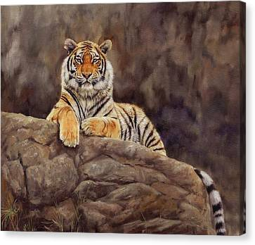 Tiger Canvas Print by David Stribbling