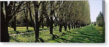 Trees Along A Walkway In A Botanical Canvas Print by Panoramic Images