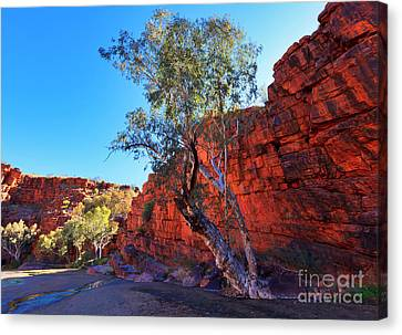 Trephina Gorge Canvas Print by Bill  Robinson