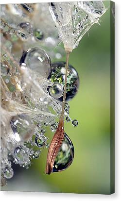 Usa, California, San Diego, Close-up Canvas Print by Jaynes Gallery