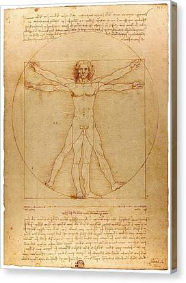 Vitruvian Man Canvas Print by Leonardo da Vinci