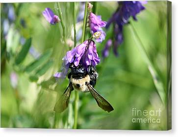What's The Buzz  Canvas Print by Neal  Eslinger