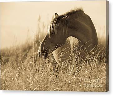 Wild Horse On The Beach Canvas Print by Diane Diederich