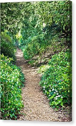 Woodland Path Canvas Print by Tom Gowanlock