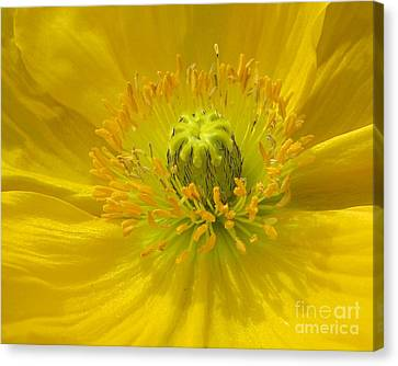 Yellow Macro Canvas Print by Chris Anderson