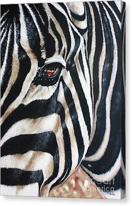 Zebra Canvas Print by Ilse Kleyn