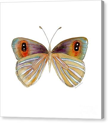 24 Argyrophenga Butterfly Canvas Print by Amy Kirkpatrick