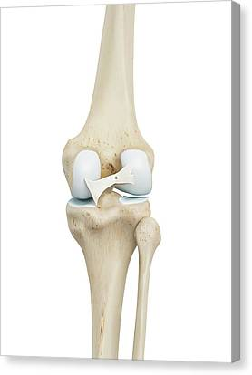 Human Knee Joint Canvas Print by Sciepro