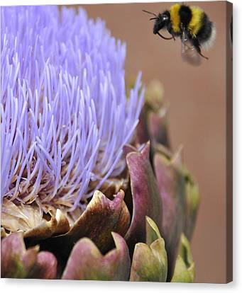 Soft Landing Canvas Print by Dave Byrne