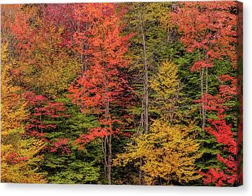 Usa, New York, Adirondack Mountains Canvas Print by Jaynes Gallery