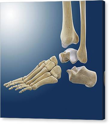 Ankle Joint Anatomy Canvas Print by Springer Medizin