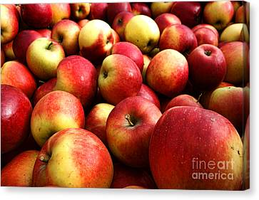 Apples Canvas Print by Olivier Le Queinec