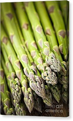 Asparagus Canvas Print by Elena Elisseeva