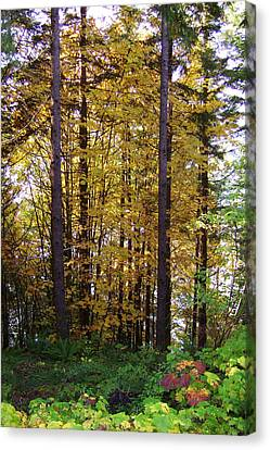 Autumn 5 Canvas Print by J D Owen