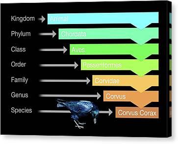 Biological Classification Canvas Print by Mikkel Juul Jensen