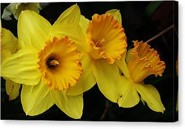 3 Blossoms In A Row Canvas Print by Bruce Bley