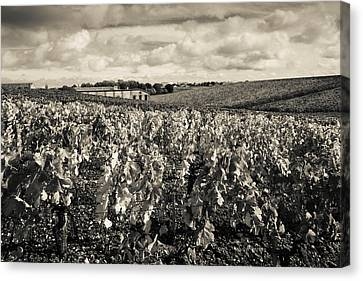 Chateau Lafite Rothschild Vineyards Canvas Print by Panoramic Images