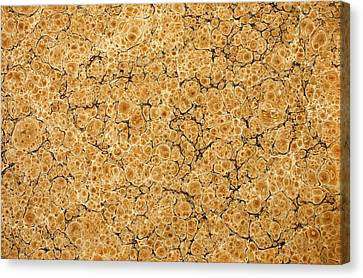Decorative End Paper Canvas Print by English School