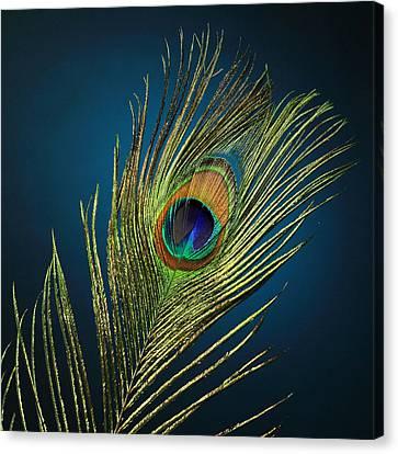 Feathers Canvas Print by Mark Ashkenazi