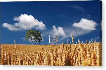 Fields Of Grain Canvas Print by Mountain Dreams