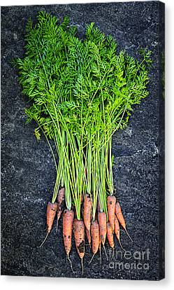 Fresh Carrots From Garden Canvas Print by Elena Elisseeva