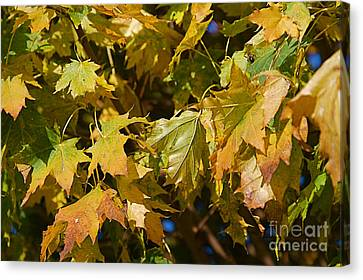 Green Tree Canvas Print by ELITE IMAGE photography By Chad McDermott