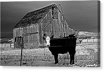 Harney County Oregon Canvas Print by Michele AnneLouise Cohen
