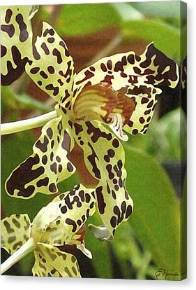 Leopard Orchids Canvas Print by Ellen Henneke