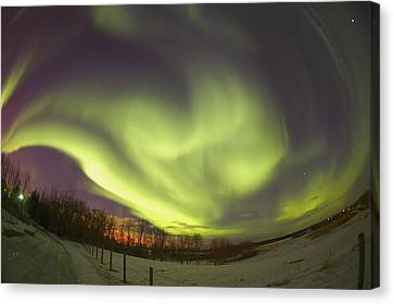 Northern Lights, Edmonton, Alberta Canvas Print by Carson Ganci