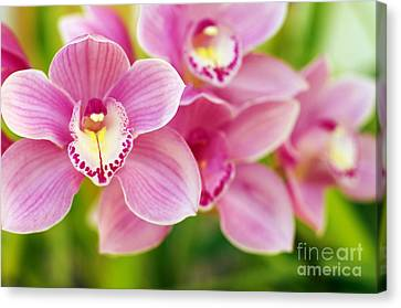 Orchids Canvas Print by Carlos Caetano