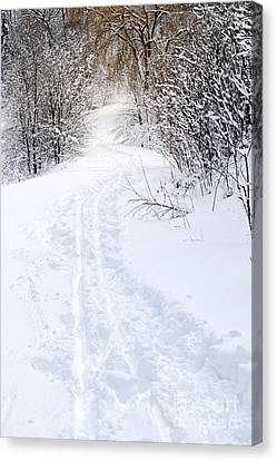 Path In Winter Forest Canvas Print by Elena Elisseeva