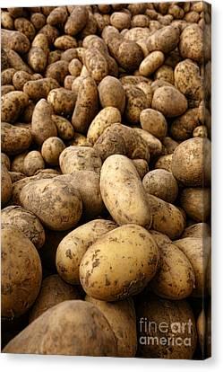 Potatoes Canvas Print by Olivier Le Queinec