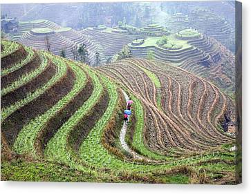 Rice Terraces Canvas Print by King Wu