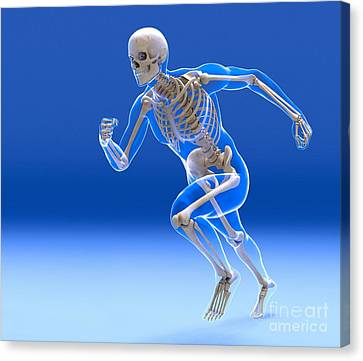 Running Skeleton In Body, Artwork Canvas Print by Roger Harris