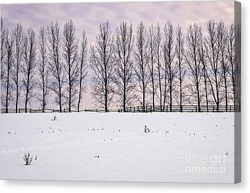 Rural Winter Landscape Canvas Print by Elena Elisseeva