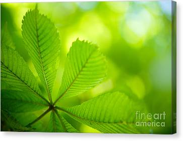 Spring Green Canvas Print by Nailia Schwarz