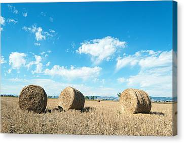 Straw Bales At A Stubbel Field Canvas Print by Svetoslav Radkov