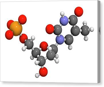 Thymidine Monophosphate Molecule Canvas Print by Molekuul