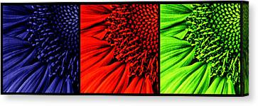 3 Tile Sunflower Colors Canvas Print by Mark Kiver