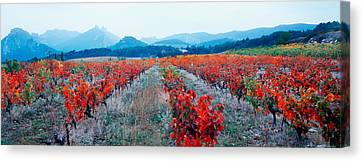 Vineyards In The Late Afternoon Autumn Canvas Print by Panoramic Images
