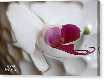 White Orchid Canvas Print by Augusta Stylianou