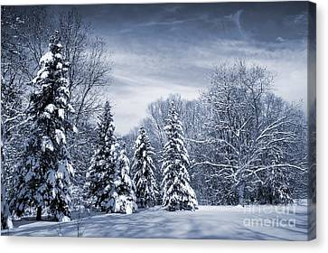Winter Forest Canvas Print by Elena Elisseeva
