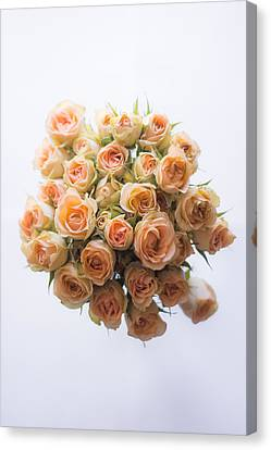 30 Roses Canvas Print by Shelby  Young