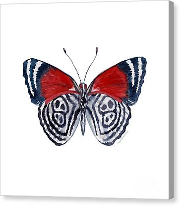 37 Diathria Clymena Butterfly Canvas Print by Amy Kirkpatrick