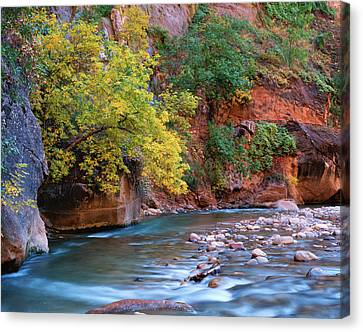 Usa, Utah, Zion National Park Canvas Print by Jaynes Gallery